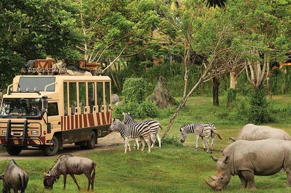 Top 10 Tempat Wisata Gianyar Bali Jadi Favorit Safari Marine