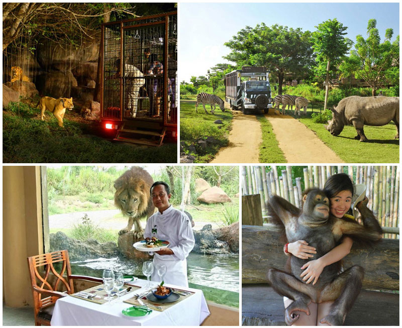 Ultimate Travel Guide Bali Attractions 38 Ways Explore Night Safari