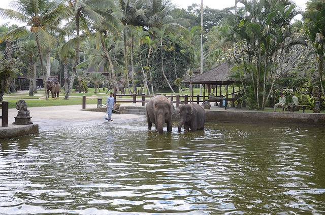Elephant Safari Park Bali Attraction Indonesia Justgola Copy Allison Mickel