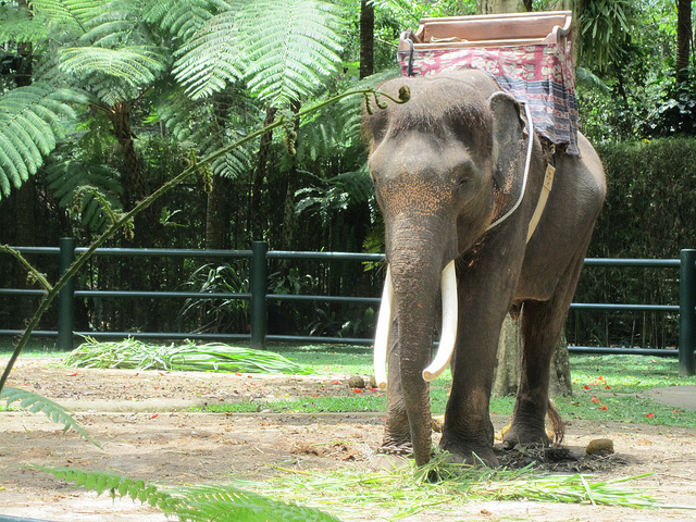 Elephant Safari Park Bali Attraction Indonesia Justgola Copy Annie Mole
