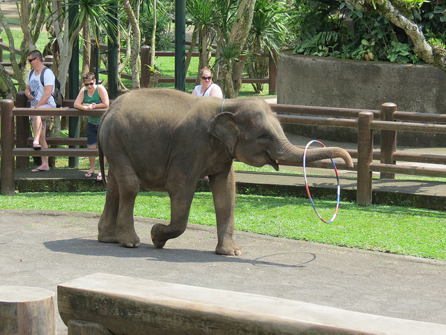 Elephant Safari Park Bali Attraction Indonesia Justgola Copy Michael Sauers
