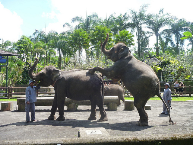 Elephant Safari Park Bali Attraction Indonesia Justgola Copy Ryan Buterbaugh