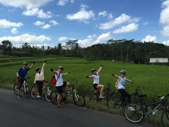 Padi Rice Field Picture Bali Bike Tour Sukawati Tripadvisor Zoo