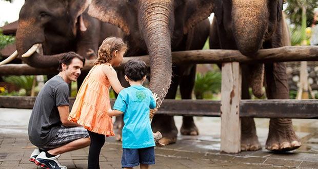 10 Tempat Wisata Gianyar Bali Menarik Terkenal Zoo Park Elephant