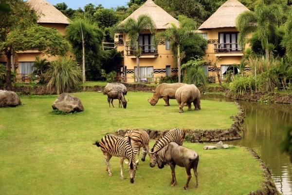 50 Tempat Wisata Gianyar Bali Terbaru Wajib Dikunjungi Safari Marine