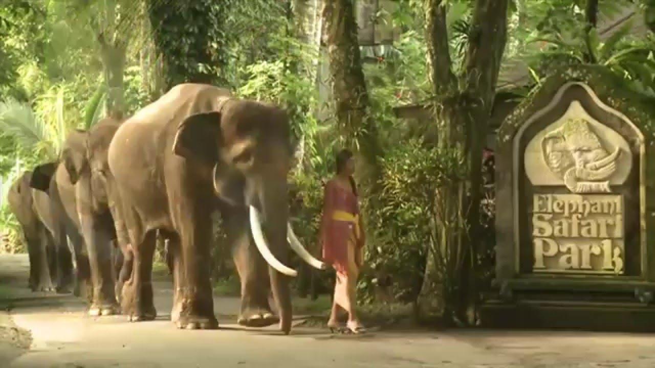Bali Elephant Ride Safari Park Taro Youtube Kab Gianyar