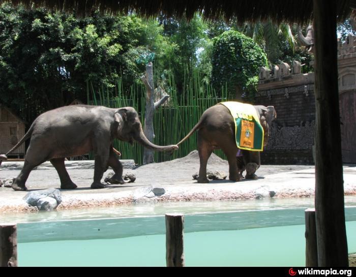 Bali Safari Marine Park Desa Serongga Gianyar Elephant Kab