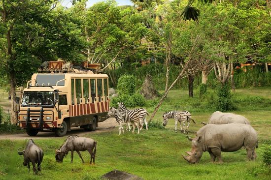 Bali Safari Marine Park Hal Menarik Informasi Elephant Kab Gianyar