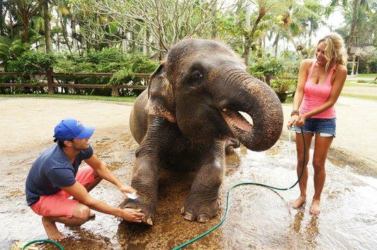 Bathing Personal Memorable Picture Elephant Safari Park Kab Gianyar