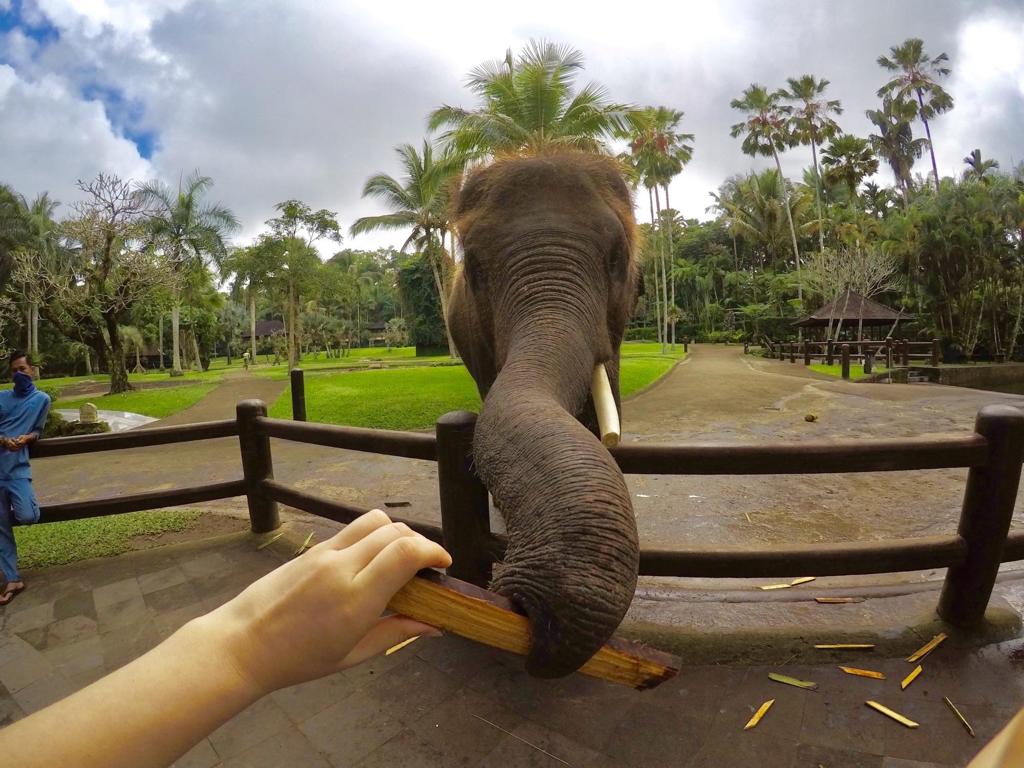 Checking Elephant Safari Park Lodge Sanctuary Kab Gianyar