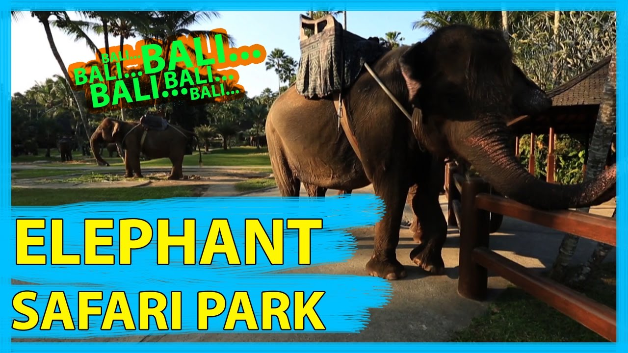 Elephant Safari Park Bali Full Hd Youtube Kab Gianyar