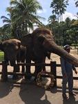 Elephant Safari Park Taro Bali Balimap Adventure 4 3 1897