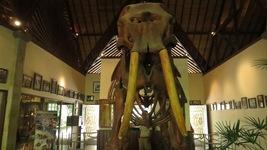 Elephant Safari Park Taro Bali Balimap Adventure Kab Gianyar