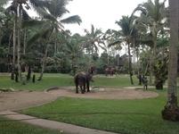 Elephant Safari Park Taro Bali Balimap Kab Gianyar