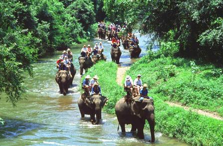 Elephant Safari Park Wisata Naik Gajah Bali Kab Gianyar