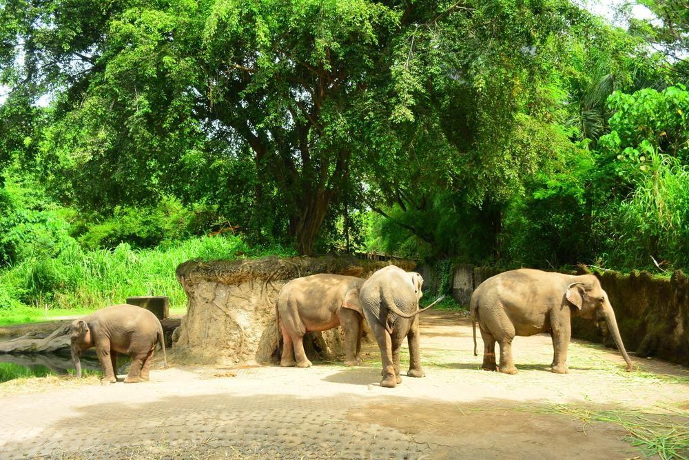 Elephant Safari Park Xplora Id Edukasi Kab Gianyar
