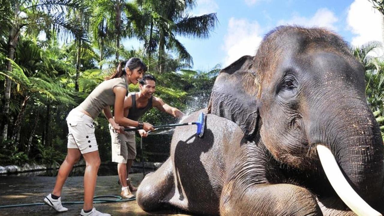 Hotel Elephants Bali Elephant Safari Park Lodge Gianyar Indonesia 5