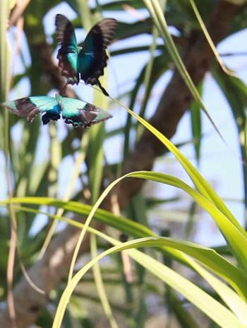 Kemenuh Butterfly Park Home Elephant Safari Kab Gianyar