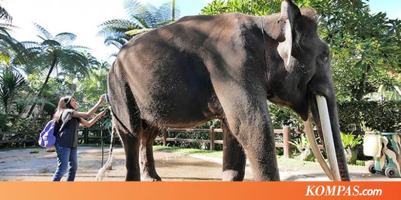 Liburan Anti Mainstream Bali Wisata Gajah Carangsari Kompas Elephant Safari