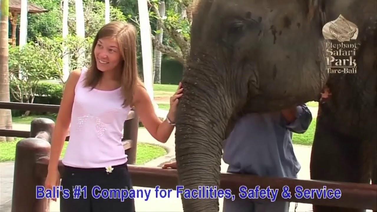 Mason Elephant Safari Park Lodge Bali Youtube Kab Gianyar