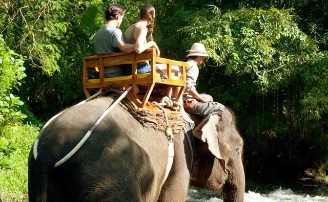 Short Trek Safari Online Bali Zoo Park Admittance Fee Ticket