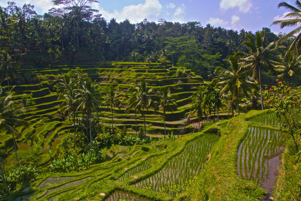 Tegalalang Rice Terrace Bali Attraction Indonesia Copy Aussie Assault Elephant