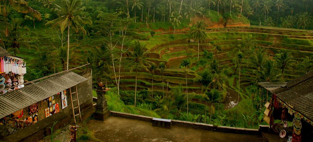 Tegalalang Rice Terrace Bali Attraction Indonesia Copy Sam Sherratt Elephant