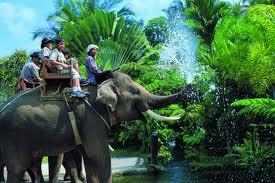 Tulisan Anak Desa Wisatawan Ajak Mengelilingi Taman Elephant Safari Park