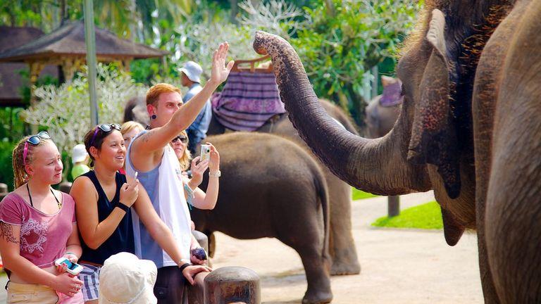 Visit Elephant Safari Park Ubud Expedia Lodge Bali Tourism Media