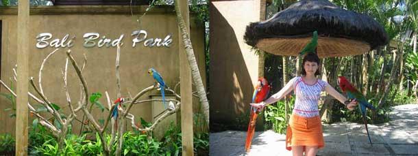 Bali Bird Park Peta Lokasi Harga Tiket Masuk Taman Burung