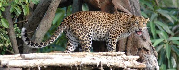 Bali Safari Marine Park Taman Kebun Binatang Terbaik Kab Gianyar