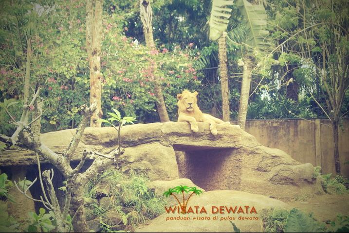 Bali Wisata Dewata Zoo Kebun Binatang Kab Gianyar