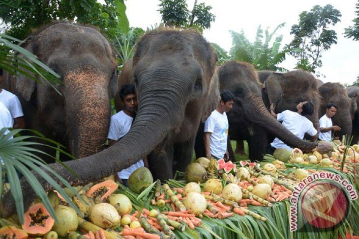 Bali Zoo Ajak Satwa Berburu Telur Paskah Antara News Sulawesi