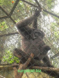 Bali Zoo Kebun Binatang Batubulan Gianyar Kab