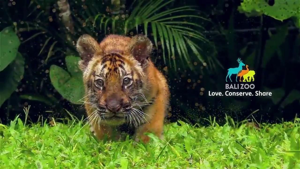 Bali Zoo Kebun Binatang Youtube Kab Gianyar