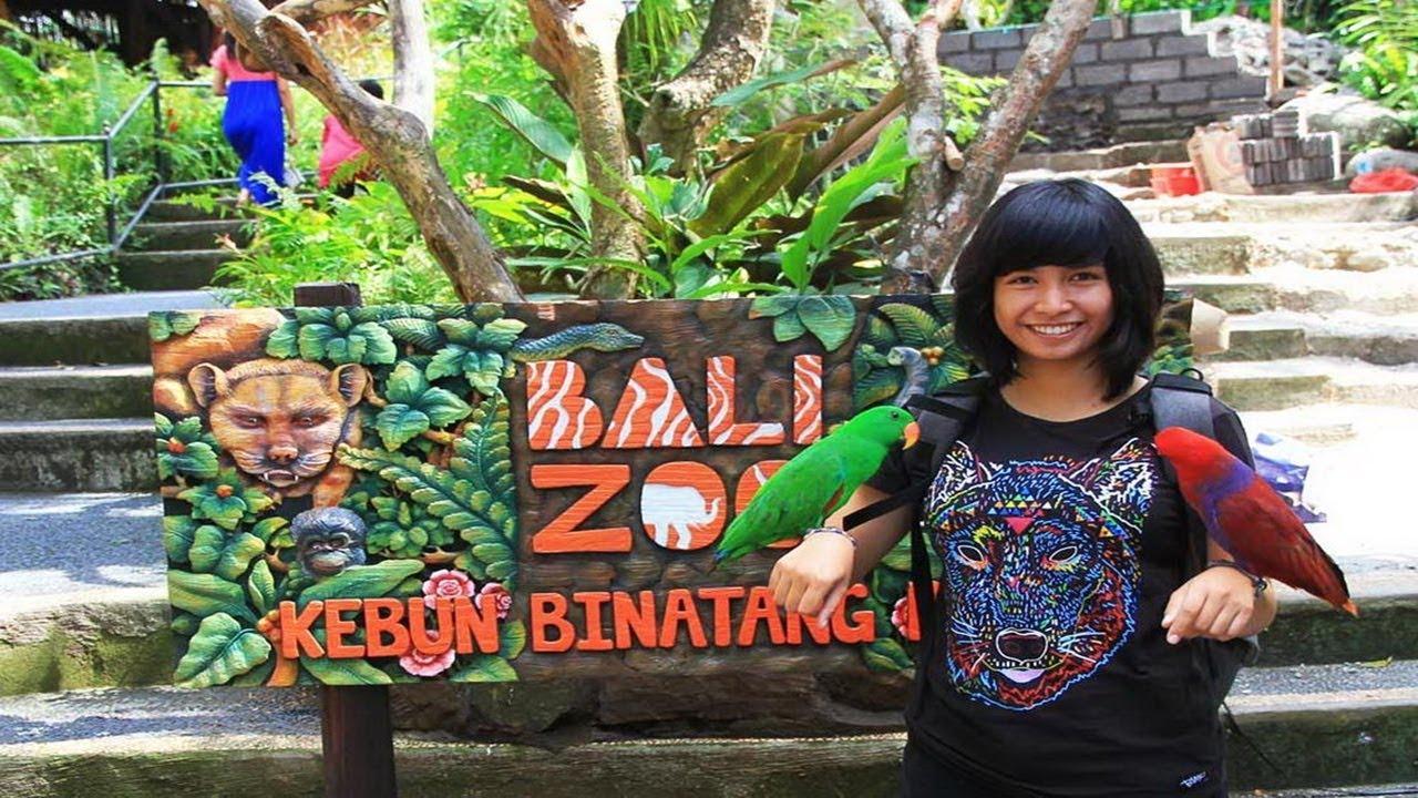 Bali Zoo Park Gianyar Berpetualang Seru Kebun Binatang Kab