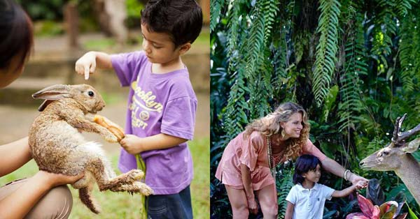 Bali Zoo Park Gianyar Harga Tiket Masuk 2018 Terbaru Daya