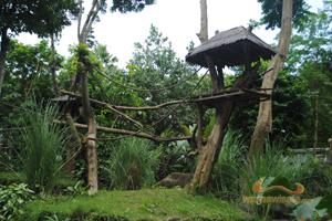 Bali Zoo Park Kebun Binatang Singapadu Gianyar Kab