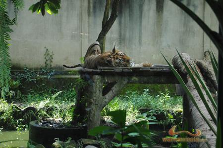 Bali Zoo Park Kebun Binatang Singapadu Kab Gianyar