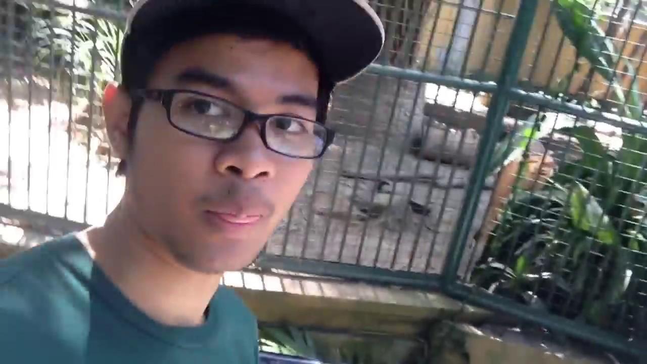 Bali Zoo Park Singapadu Kabupaten Gianyar Youtube Kebun Binatang Kab