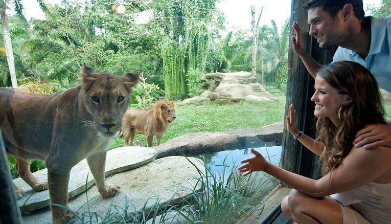 Bali Zoo Park Terletak Jalan Singapadu Kabupaten Gianyar Kebun Binatang