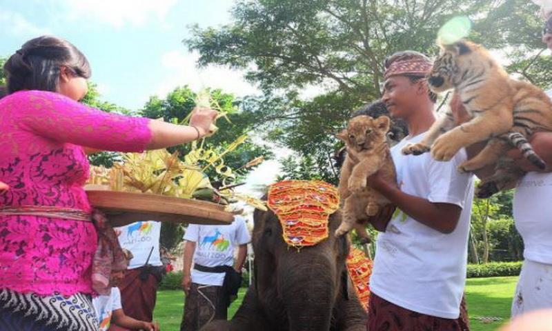 Bali Zoo Sabet Penghargaan Lembaga Konservasi Terbaik Nih Koleksi Https