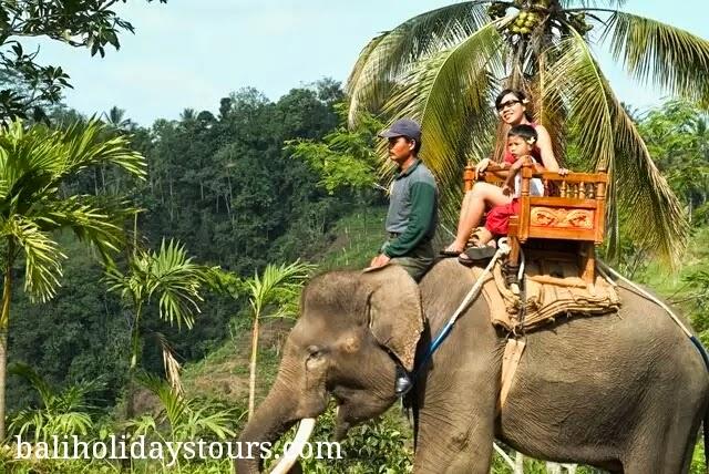 Bali Zoo Tempat Wisata Favorit Keluarga Info Harga Tiket Kebun