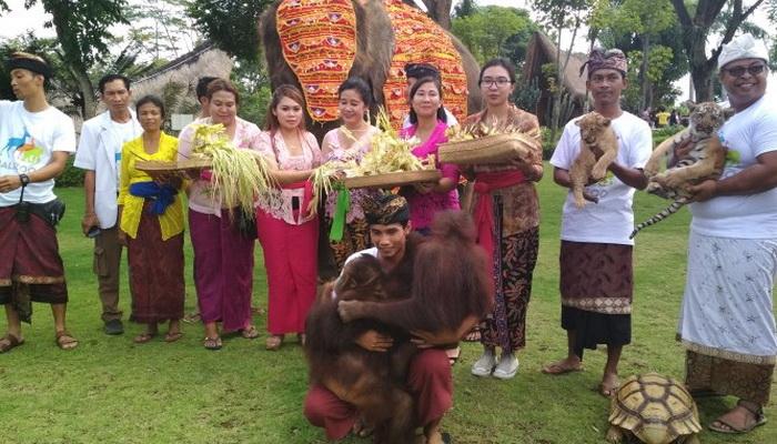 Bebaskan Penyakit Satwa Bali Zoo Jalani Ritual Tumpak Kandang Gianyar