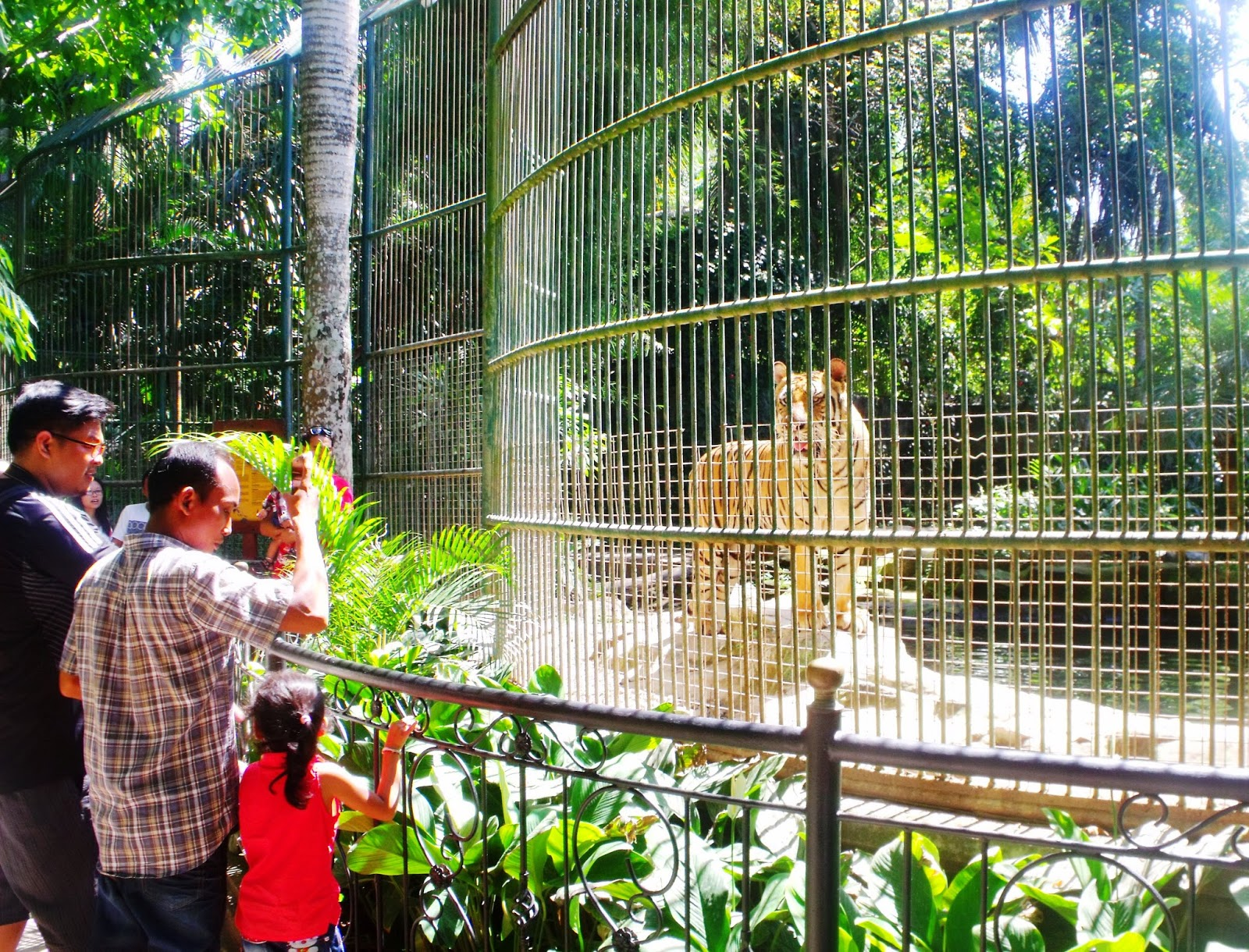 Berwisata Tengah Aneka Hewan Bali Zoo Park Catatan Kaki Salah