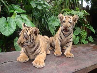 Binatang Bali Kebun Kab Gianyar