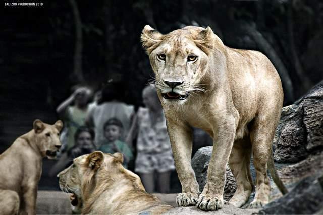 Harga Tiket Bali Zoo Park Biaya Masuk Kebun Binatang Taman
