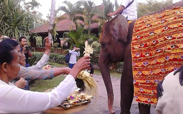 Hari Ulang Binatang Satwa Bali Zoo Disembayangi Kabarnusa Bertepatan Ulah