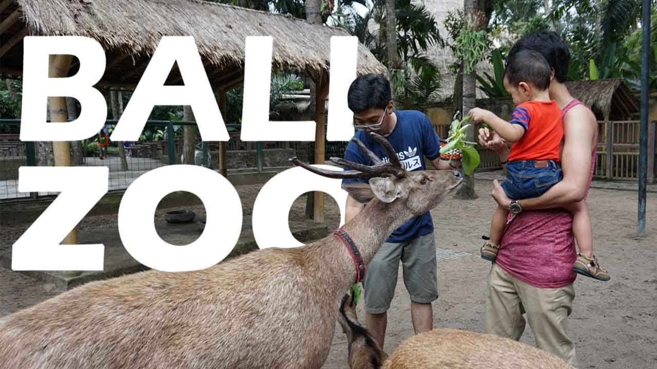 Jalan Bali Zoo Kebun Binatang July 2017 Youtube Kab Gianyar