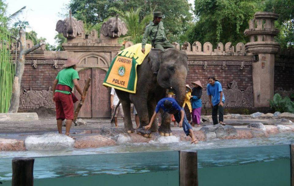 Kebun Binatang Bali Destinasi Liburan Unik Menarik Atraksi Gajah Safari
